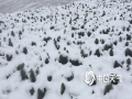 受强冷空气影响,27日凌晨开始,甘肃永靖出现雨(雪)天气,境内陈井、关山、徐顶、王台、川城、坪沟等山区乡镇出现降雪,积雪深度在10-16厘米之间,雪花飞舞间,带给了人们不一样的美。(图/司发梅)