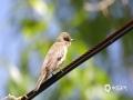 中国天气网讯 每年的五月中下旬到六月是新疆北疆地区观鸟的黄金时期。近日阿勒泰地区雨过天晴、阳光明媚,鸟儿在枝头和花丛中嬉戏觅食,构成一幅迷人的鸟儿嬉春图。(图/吴小明 文/薛俊梅 )