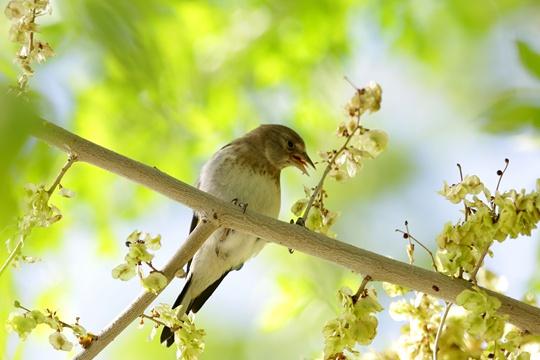 百鸟嬉春! 新疆阿勒泰迎来观鸟黄金季