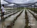 图为6月8日新余市分宜县操场乡赤土村竹荪种植基地遭洪涝。