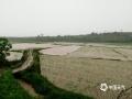 图为6月9日上午,受强降雨影响,丰城市泉港镇农田被淹。摄影/孙芳