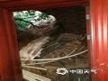 图为山体滑坡压塌民房屋顶,房屋损毁严重。(文/曾钦文 图/龙川县三防办)
