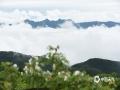 中国天气网讯 近两日,重庆丰都被雨水笼罩,大山雨雾缭绕,仿若仙境一般。(谭永忠/摄)