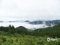 近两日,重庆丰都被雨水笼罩,大山雨雾缭绕,仿若仙境一般。(谭永忠/摄)