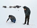 6月17日18时起,三江源头第一县曲麻莱县,出现强降水天气过程,截止18日08时,降水量多达24.7毫米,雪深达8厘米。由于前期降水偏少,此次降水极大地缓解了当地的旱情,有利于牧草返青和后期良好生长。但积雪较深,预计部分草原积雪在短期内难以融化,对牛羊采食和交通将有一定影响。(图/文 李爱军 毛树娜 赵海梅)