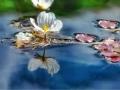 六月泸沽湖 蓝的让你忘记夏的燥热