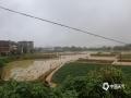 中国天气网讯 受强降雨影响,6月23日,福建省建瓯市河流水位猛涨,部分地段积水严重,城郊部分建筑被淹,农田受灾。 (图/王杨娟  文/魏荻沁)