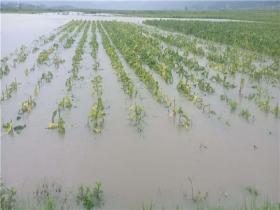 暴雨袭击云南陇川!洪涝灾害和山体滑坡齐发