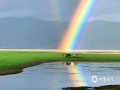 """7月2日傍晚,香格里拉纳帕海上空出现精彩的""""双彩虹""""现象,伴着淅沥沥的小雨,景色动人,引起过往游客驻足观看。图为在彩虹下悠然吃草的骏马。摄/李安琪  文/孙娅蕾  """