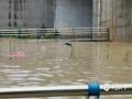 中国钱柜娱乐777天气网讯 5-7日,柳州出现了大范围的暴雨到大暴雨天气,最强降雨区位于融水县西部和市区北部。柳州的融水、鹿寨、柳城等县区出现严重的洪涝灾害,部分乡镇道路被冲毁、民房被淹,大半个柳州市都被水浸泡。柳州市气象台接连发布雷电橙色、大风蓝色、暴雨红色预警。图为柳州市一处桥底积水没过车顶。(文/李宜爽 图/刘德)