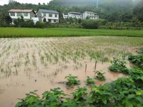 四川内江遭遇暴雨袭击 公路被淹山体垮塌