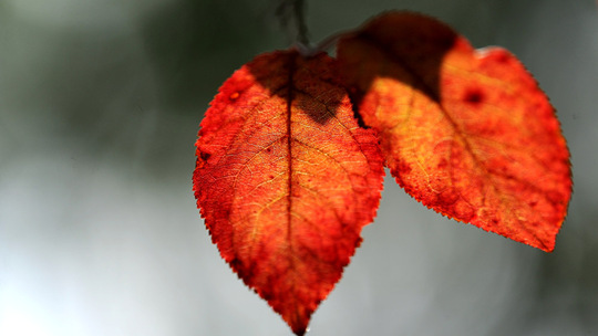 贵阳叶色斑斓 似秋将至