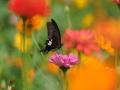 贵阳天晴花更俏 花香引蜂蝶