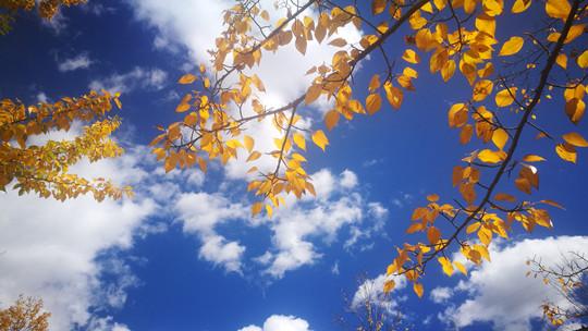 秋色里的四川甘孜新都橋 美的像一幅油畫