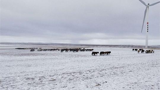 内蒙古全区气温暴跌 部分地区?#36842;?#26292;雪