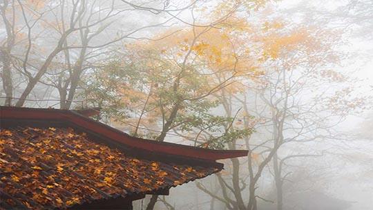 云雾缭绕 峨眉山金秋美景如仙境