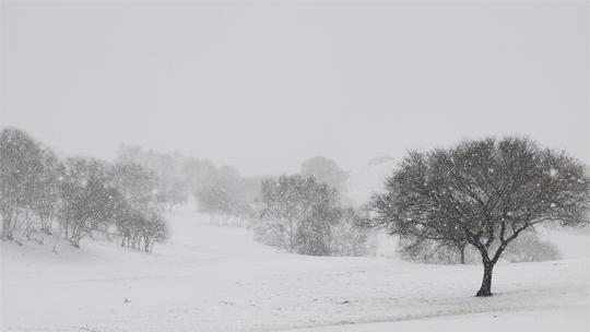河北围场迎降雪 天地融为一体如画卷