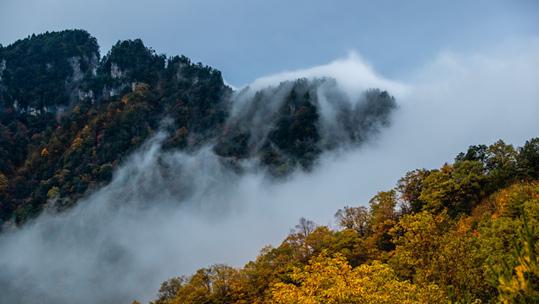 湖北神農架晨霧繚繞 秋色迷人