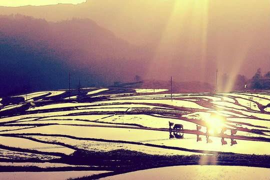 四川达州金石梯田 秋阳中的五彩斑斓