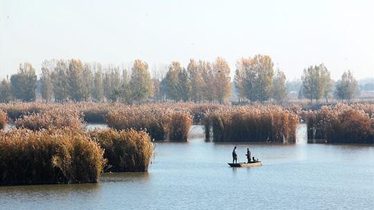 风吹芦絮如飘雪 千年水城邯郸景致迷人