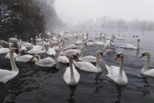 冬日里的人间仙境:新疆伊宁县英塔木镇天鹅泉