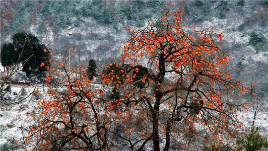 甘肃成县:初雪后  遇见冬日里的水墨画