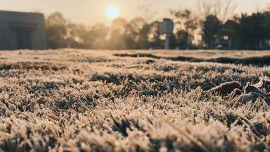 """冬霜之美 芜湖阳光下美丽的霜""""精灵"""""""