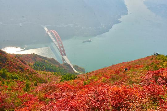 重庆:漫山红叶醉巫峡 美轮美奂