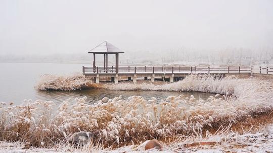津城呈現霧凇奇觀 宛如雪后潔白世界