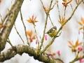 重庆涪陵迎春分 鸟语花香桃红枊绿