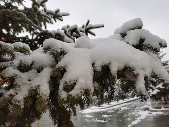甘南高原雪纷飞 迟归春色别样美