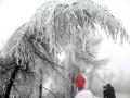 重庆三月现雾凇 玉树琼枝引游人