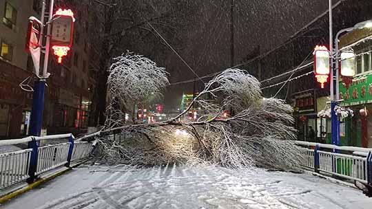 青海贵南遭遇近十年5月少见暴雪