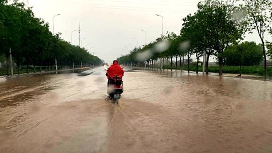 强风雨袭扰辽宁 局地农田积水树木倒伏