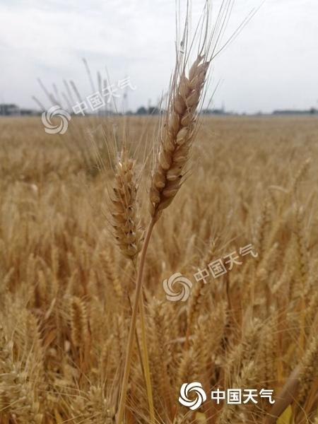 安徽北部高温来袭局地可达37℃  阜阳发布高温橙色预警