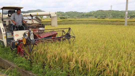 广东德庆:早稻泛金收割忙 绘就丰收画卷