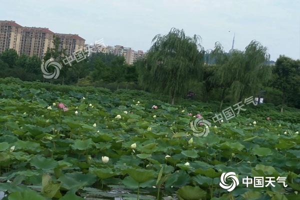 今明天安徽雨势猛烈 六安芜湖宣城等地有大雨到暴雨局部大暴雨