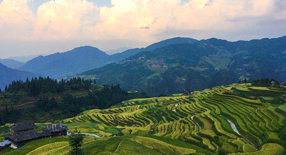 贵州苗乡最美梯田 又是一年稻谷香