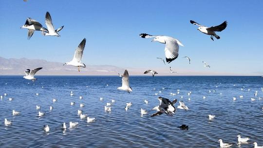 青海小柴旦湖 鑲嵌在群山荒漠中的藍寶石