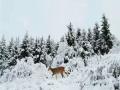 四川若爾蓋絕美雪景塑造童話冰雪世界