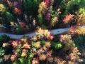 层林尽染!重庆酉阳五彩林进入最佳观赏季