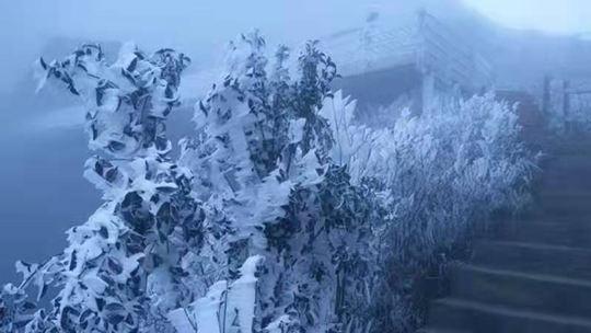 广东也能赏雾凇!连山金子山景区现大片雾凇景观 处处玉树琼花
