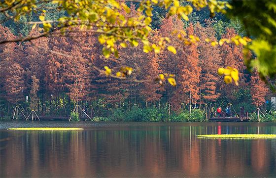 重慶彩云湖濕地公園秋景猶存 色彩斑斕