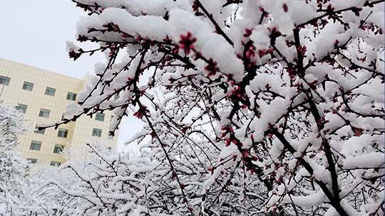 四月第一天 青海多地出现大雪重现冬日景象