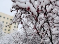 四月第一天 青海多地出現大雪重現冬日景象