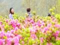 重庆酉阳200亩杜鹃盛开点缀山林 游人赏花相映红