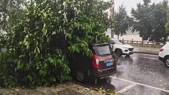 廣西桂林遭遇強對流 大風刮斷樹木民房屋頂被掀翻