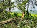南海热带低压登陆海南陵水 大风扫过大树连根拔起
