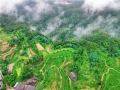 盛夏时节给眼睛降降温 航拍四川巴中茶山翠绿