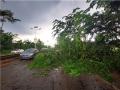 云南勐腊县遭遇强对流 树木折断影响出行